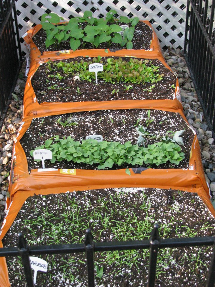 Organic Soil Cube Gardening Organic Home Farmer